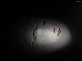 Spuren von Affen und Schweinen im Sand