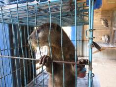 ein Otter (die machen ganz süße Töne)