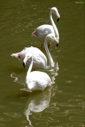 Flamingo Tanz