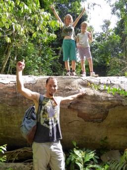 ein riesiger Dschungelriese ist mitten auf den Weg gefallen