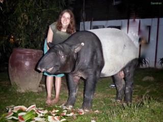 Leila und das Tapier mit seinen Melonen