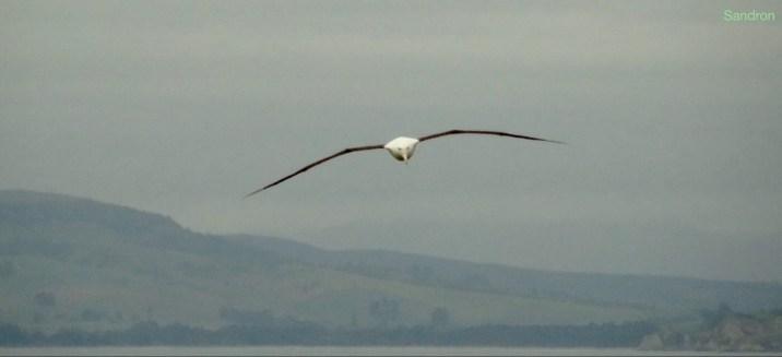 Sooo lange Flügel