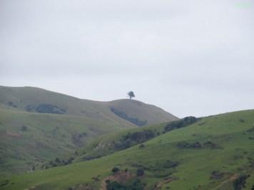 Ein einsamer Baum.