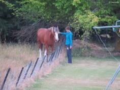 Sandra hats eh raus mit den Pferdchen