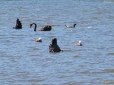 Köpfchen in das Wasser, Schwänzchen in die Höh!!!