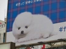 Wuschel-Hund Werbung