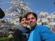 Kirschblüten!