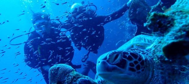 Tauchen auf Bunaken: Makro, Schildkröten und eine Diskomuschel