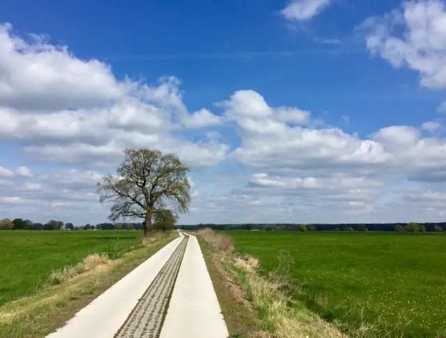 Elbe-Radtour-Waldautobahn- 1