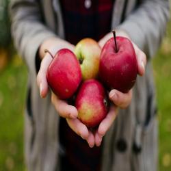 Apple Mania 9.25.18 @ Welty Environmental Center