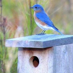 Gems of Blue @ Welty Environmental Center