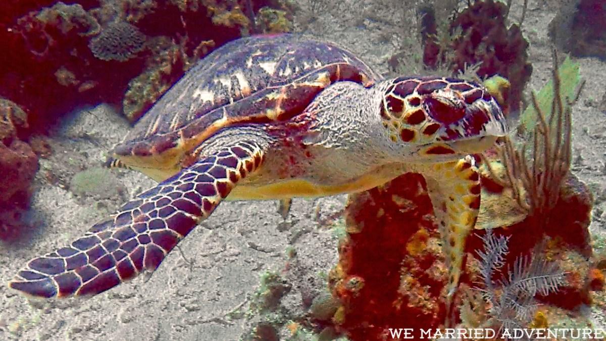 turtle03_wm