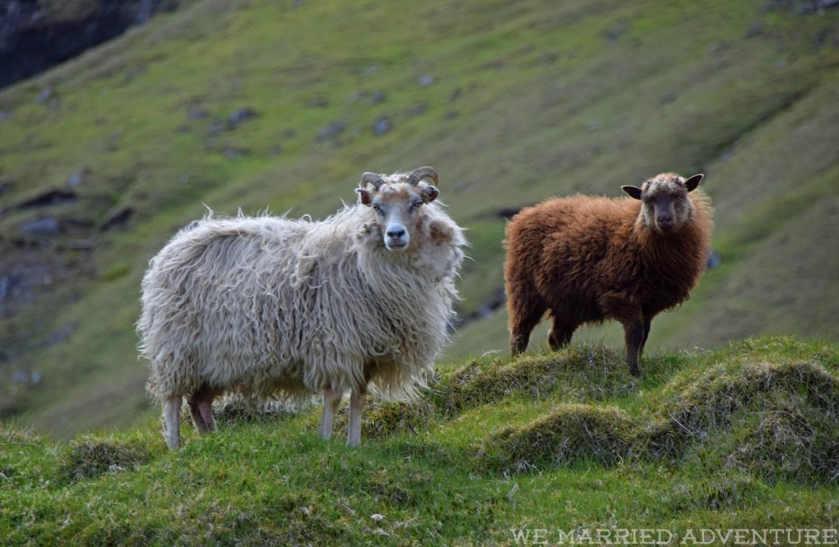 sheep04_wm