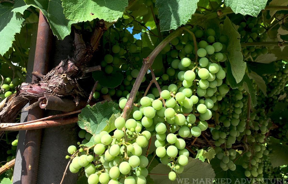 grapes01_wm