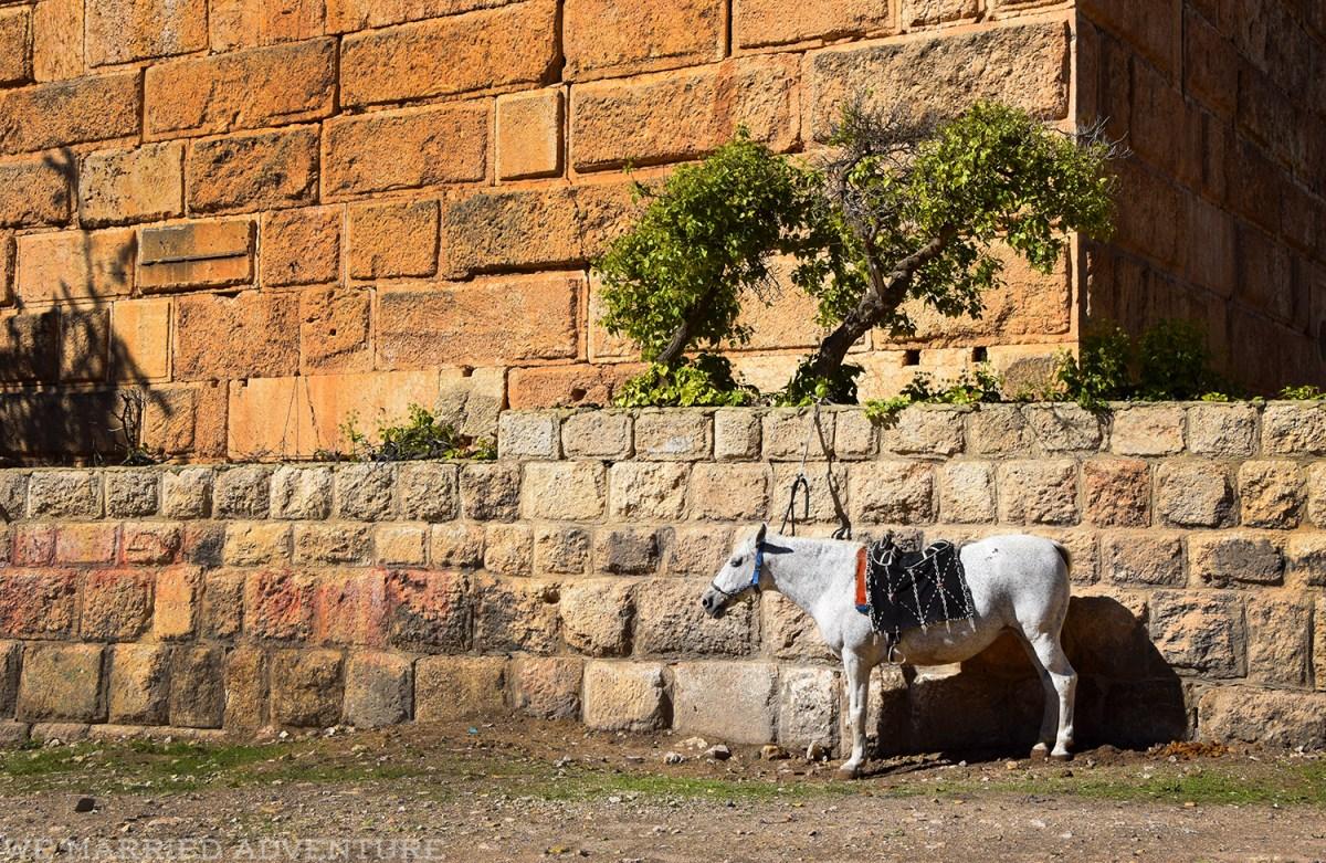 baalbek05_horse_wm