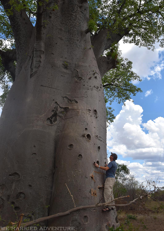 m_tree_wm
