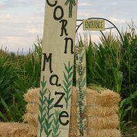 corn maze 1