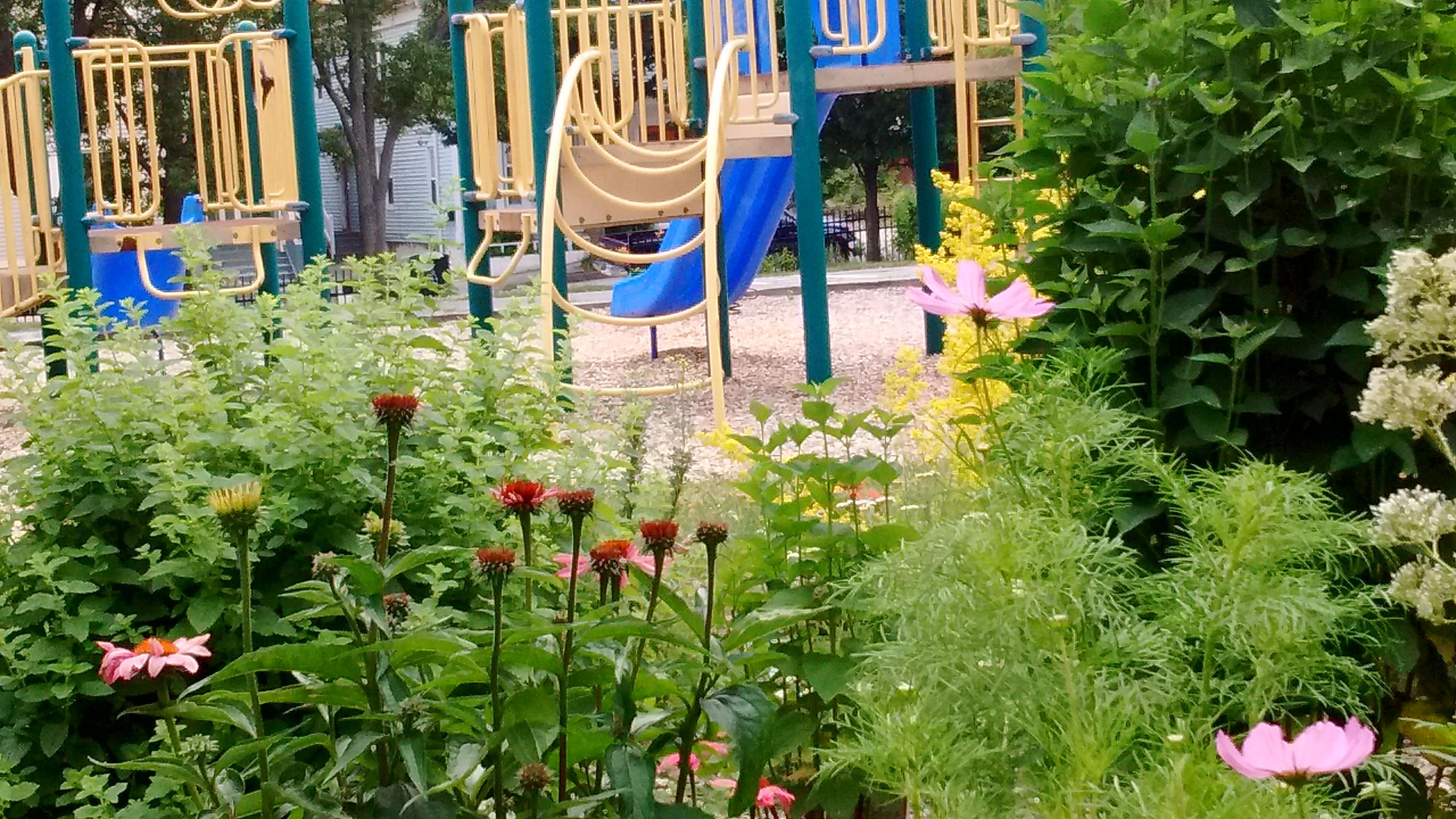 Clark Street Park – Herb Garden