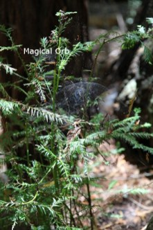 sm-magic-orb-IMG_0112