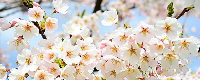 春天各種花的顏色有哪些 - 花百科
