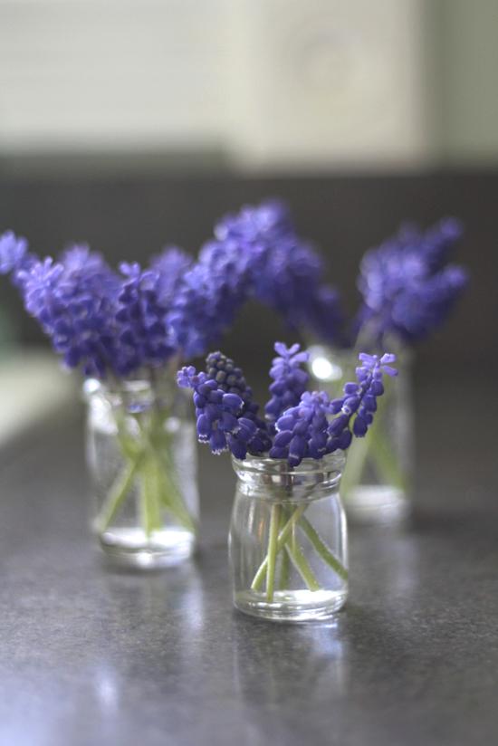 3-creamer-jar-grape-hyacinth-vertical-kitchen