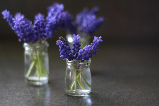 3-jcreamer-jars-grape-hyacinth-counter-close-up