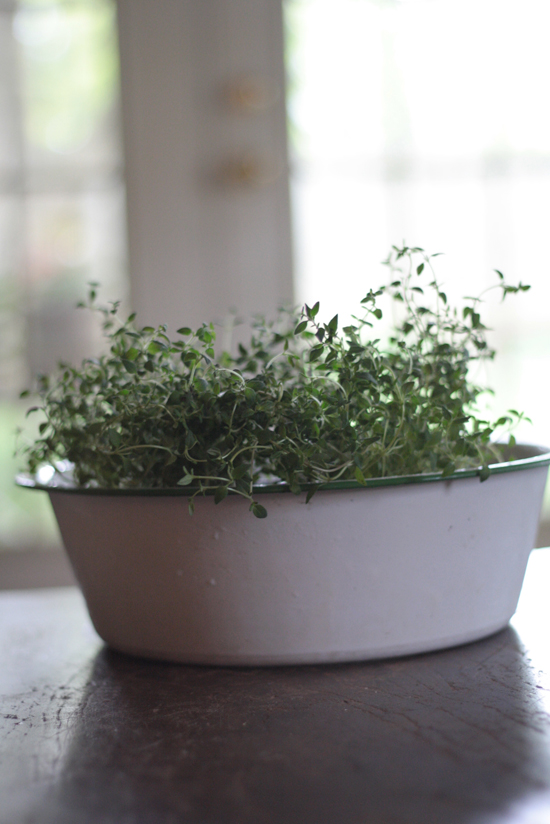 antique-enamel-bowl-herbs-horizntal
