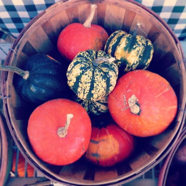 bushel-of-pumpkins