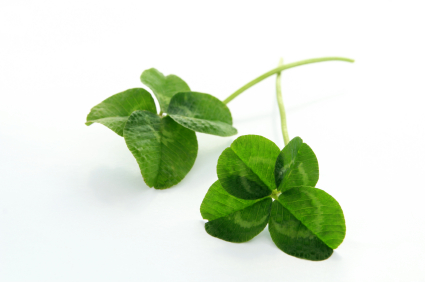 istock_000005210471xsmall-4-leaf-clover