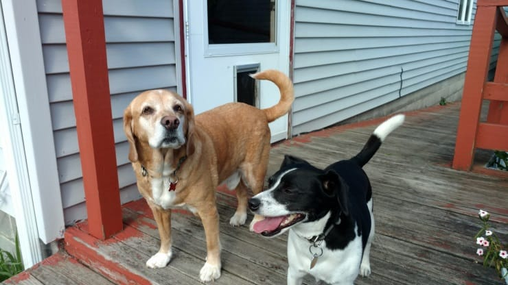 Owney and Corky out back by steps