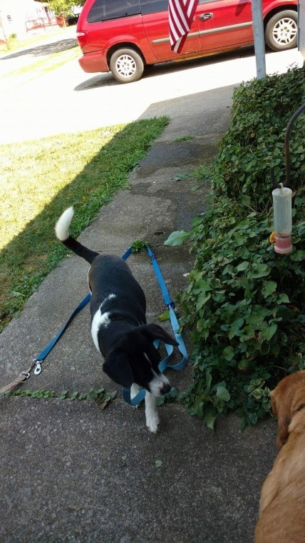 Owney and Corky out front