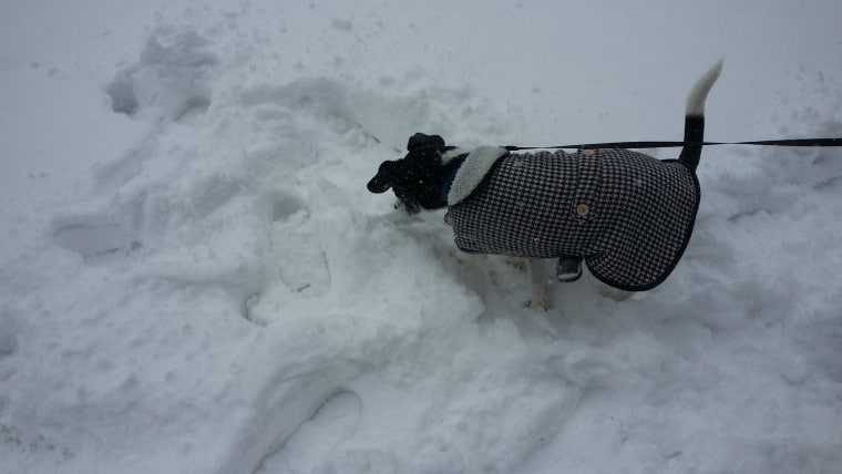 Owney and the snow