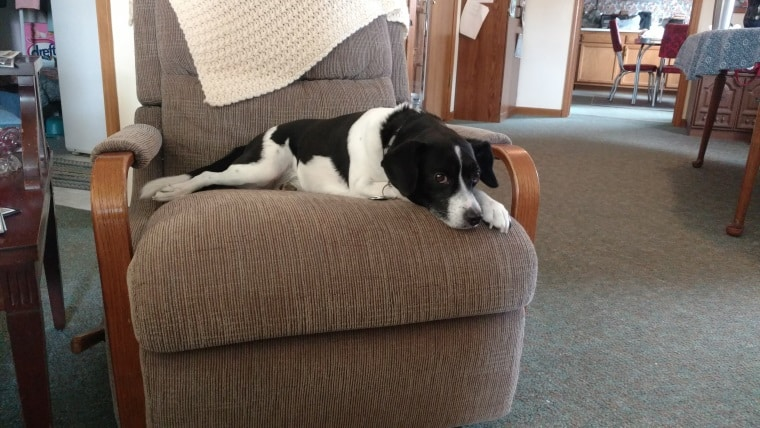 Owney on Grandma's Chair