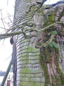 AB Tree 3