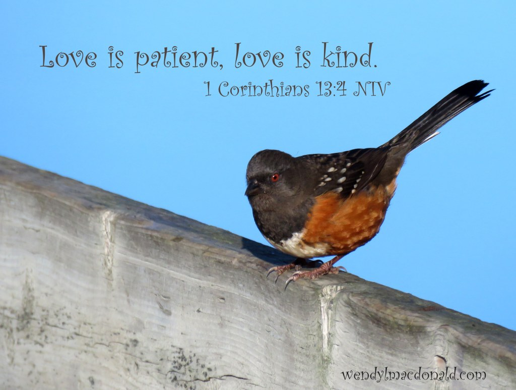 Love is patient, love is kind. A Kiss of Kindness: Finding God's Comfort wendylmacdonald.com