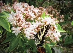 Chasing Butterflies #memoir #amwriting wendylmacdonald.com