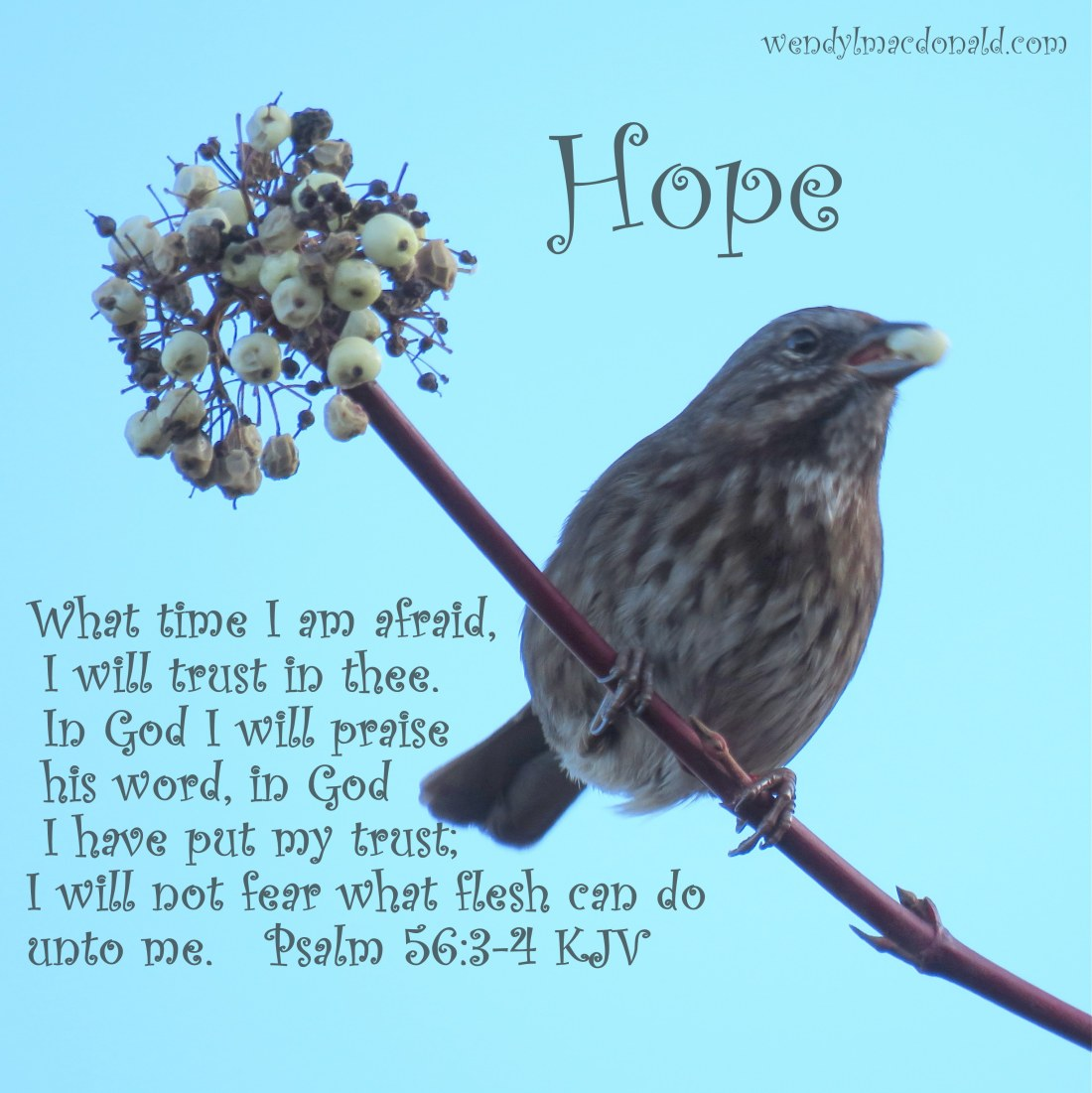 What time I am afraid, I will trust in thee. In God I will praise his word, in God I have put my trust; I will not fear what flesh can do unto me. Psalm 56:3-4 KJV