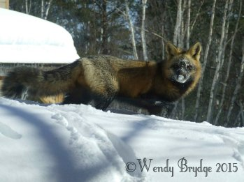 Always amusing to watch him root around in the snow.