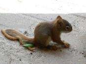 Baby Squirrel4