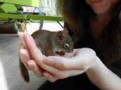 Wendy and Baby Squirrel3