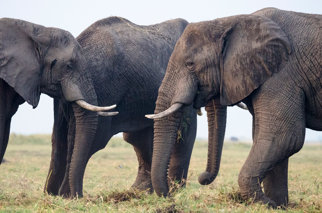 Wendy Ng Photography: Botswana &emdash; Elephant Family