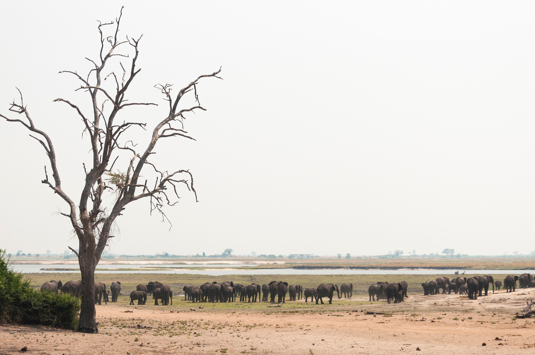 Wendy Ng Photography: Botswana &emdash; Surrounded by Elephants