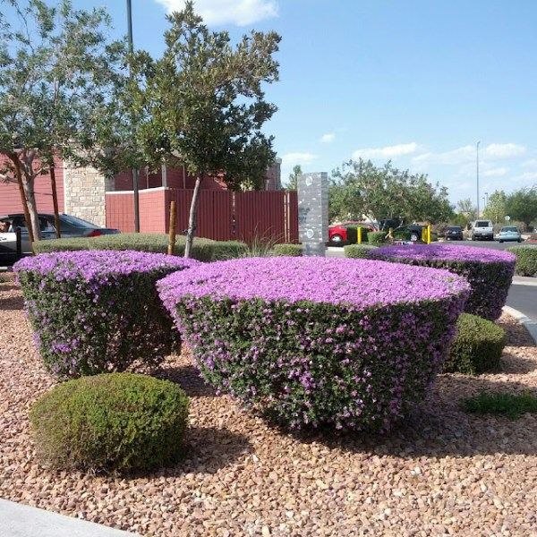 flowering shrubs garden - wendys