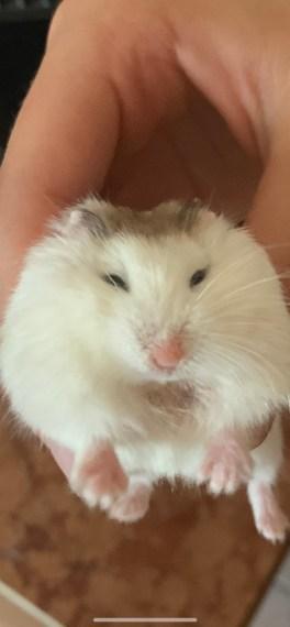 Jumpy Hamster