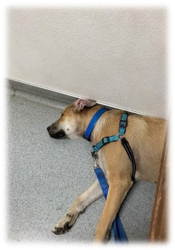 Dogs don't take cat-naps at the vet.