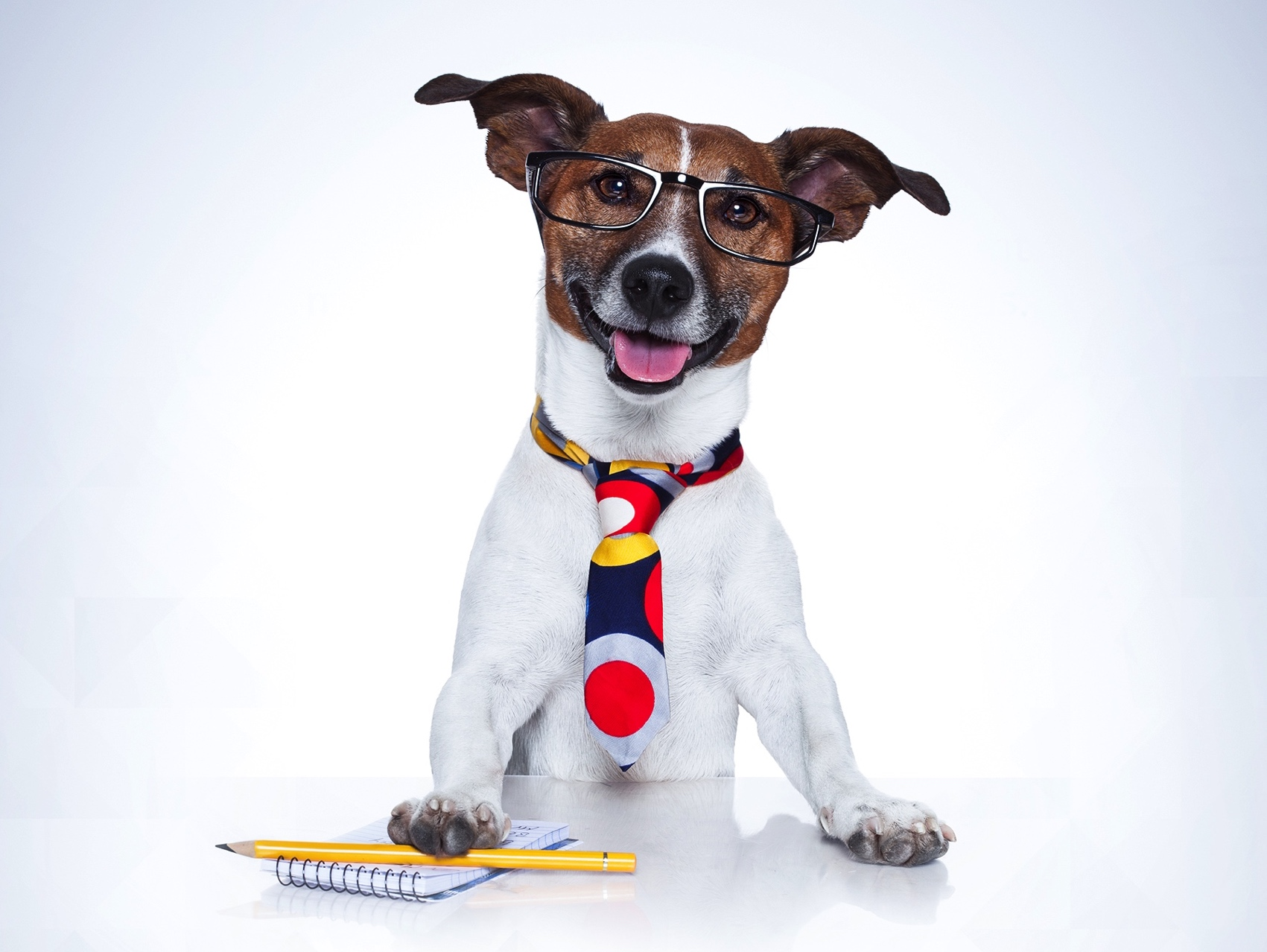 Jobs with Animals for pet Lovers