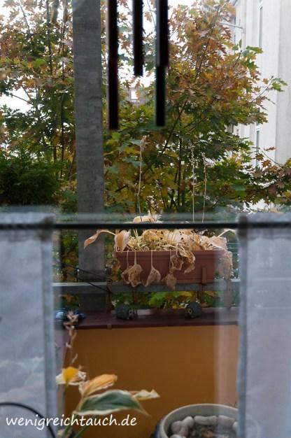 Blick aus meinem Küchenfenster. Auch der Baum im Hof begibt sich in den Ruhemodus.
