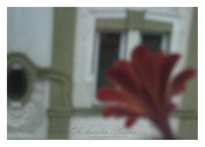 -Zum Fenster raus-