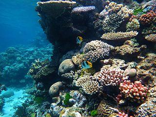 great_barrier_reef-flynn
