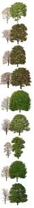 treescolo02
